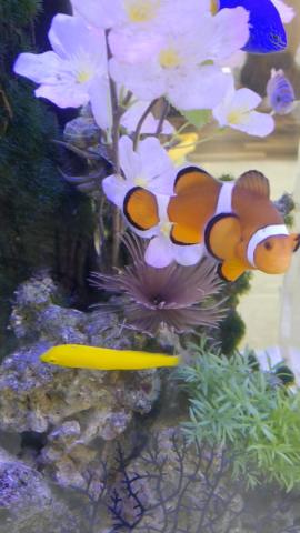 水槽レンタルしている海水魚