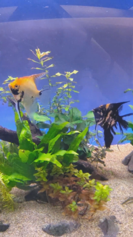 水槽レンタルしている熱帯魚