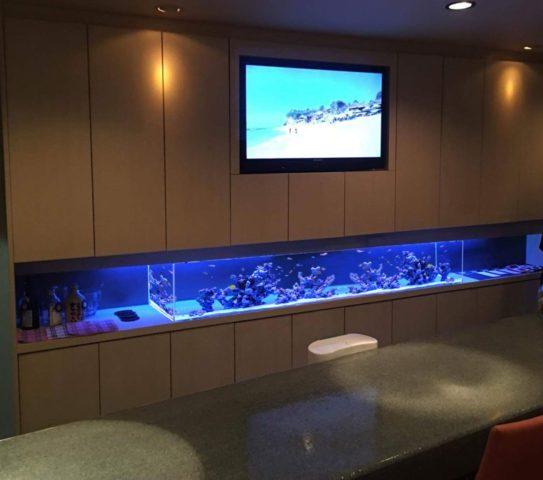 海水魚レイアウトの合成画像イメージ