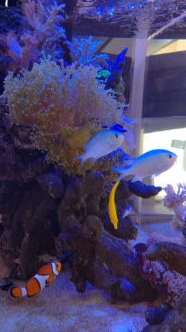 熱帯魚水槽レンタル 海水魚水槽レンタル 水槽メンテナンス